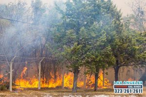 As the Weather Begins to Warm Up Again, Wildfires Become a Real Possibility