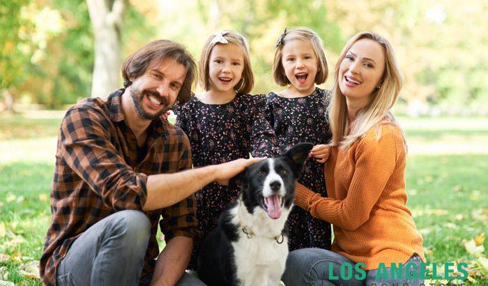 pet laws